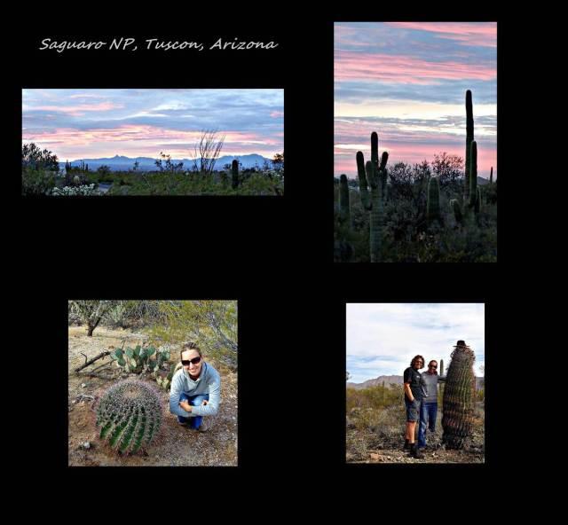 13 - Saguaro NP 1 (Large)