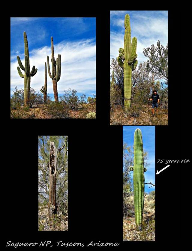 14 - Saguaro NP 2 (Large)