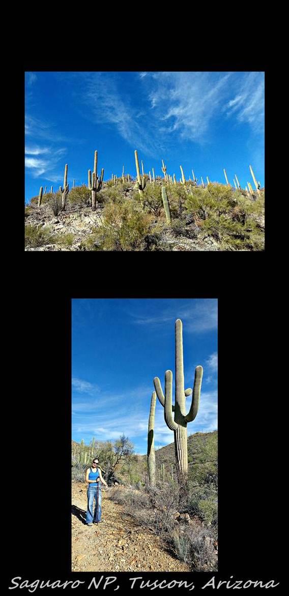 15 - Saguaro NP 3 (Large)