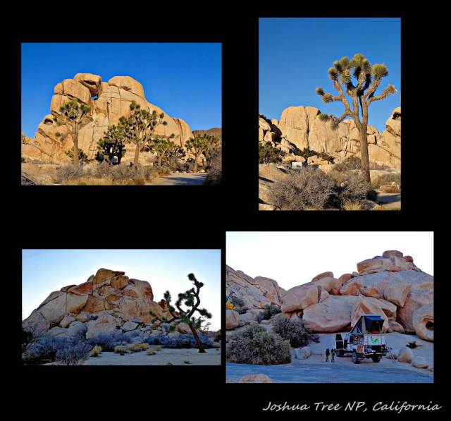 18 - Joshua Tree NP (Large)