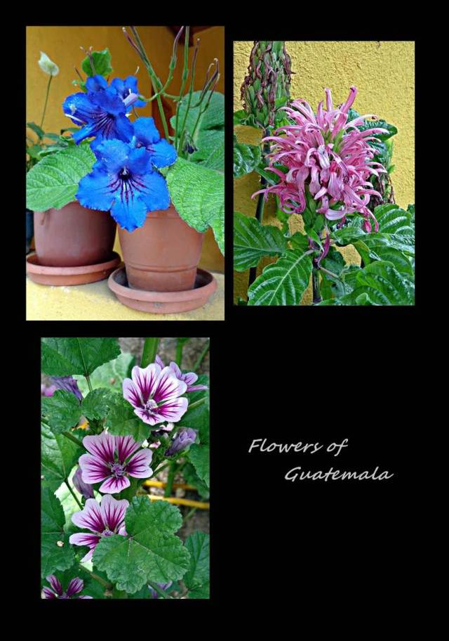 4 - Guatemala flowers (Large)