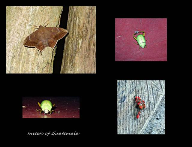 6 - Strange insects (Large)