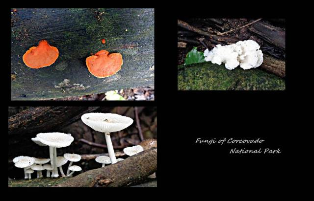 29 - Fungi of Corcovado (Large)