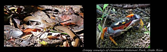 32 - Creepy crawly's of Corcovado (Large)