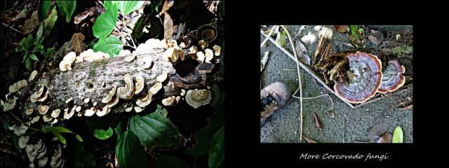 38 - More fungi (Large)