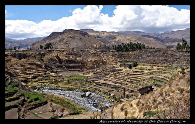 67 - Agricultural terraces at Colca canyon (Large)