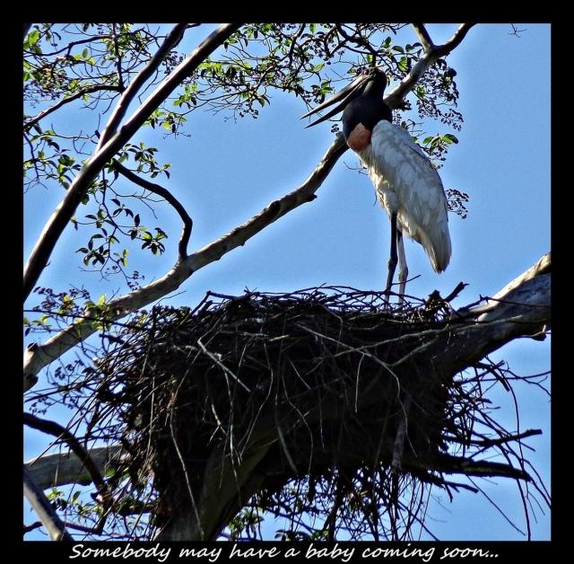 26 - Stork (Large)