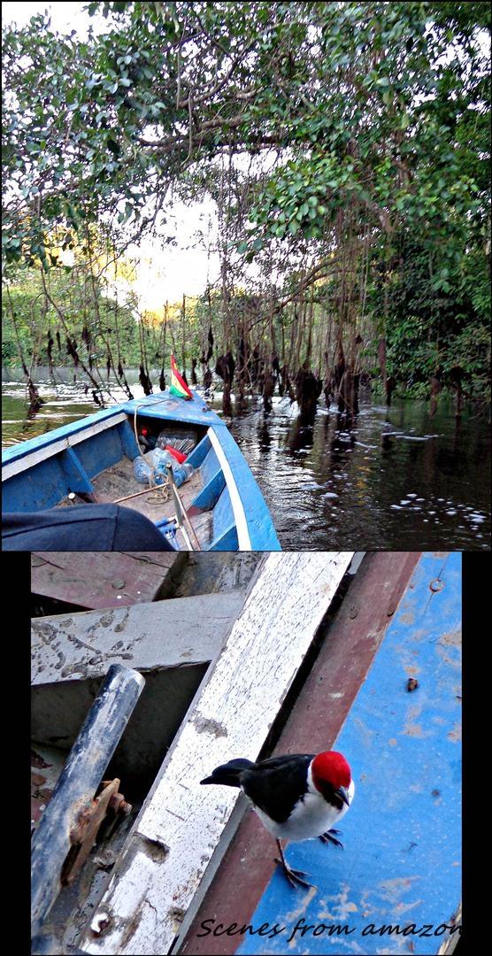 30 - More Amazon (Large)