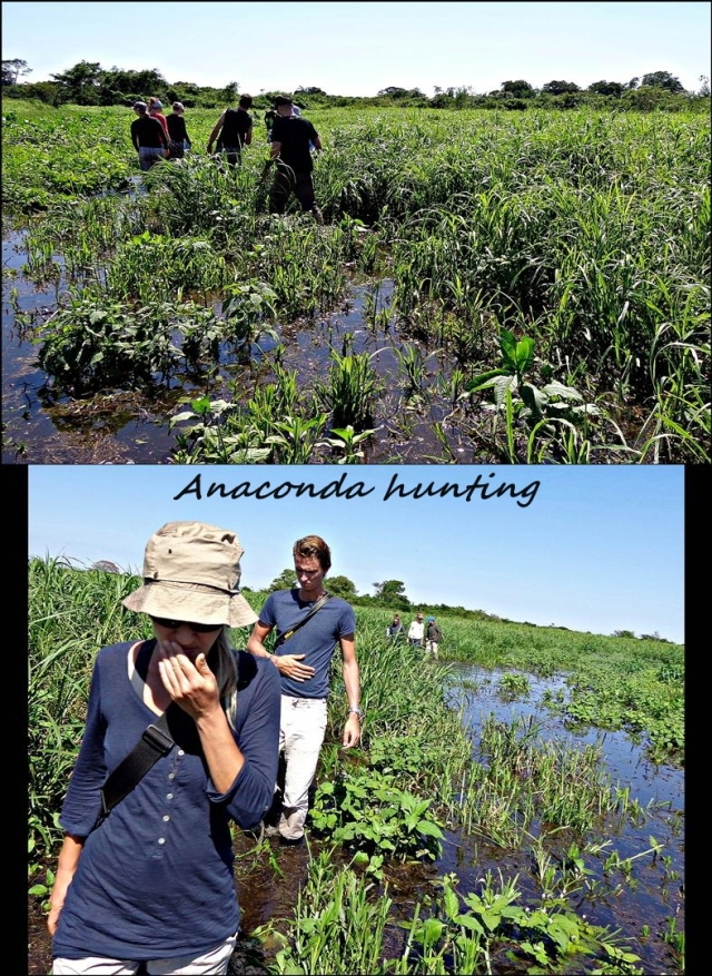 31 - Anaconda hunting (Large)