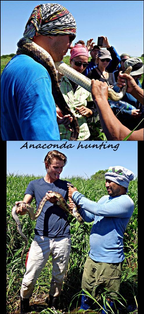 33 - Hold the anaconda (Large)