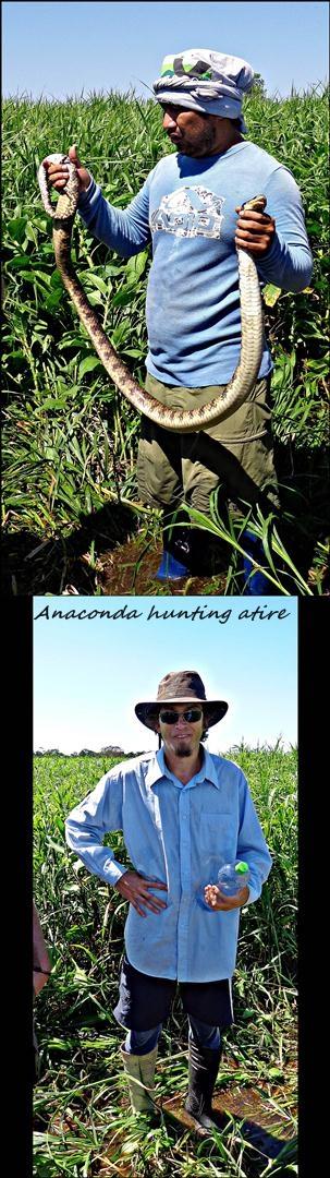 34 - Anacondas (Large)