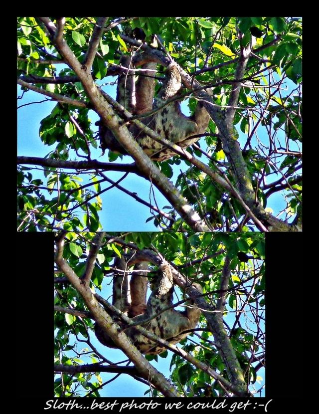 43 - Sloth (Large)