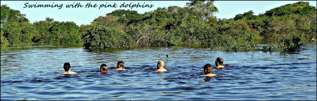 44 - Swimming with the dolphins (Large)