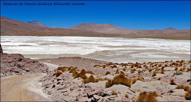 78 - SW bolivia (Large)