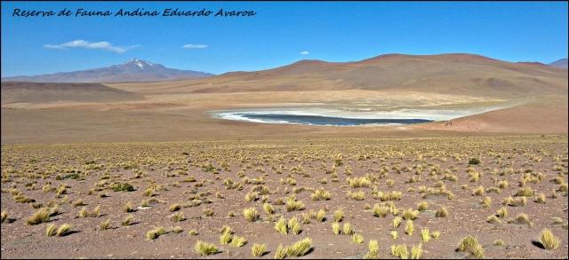 81 - SW bolivia (Large)