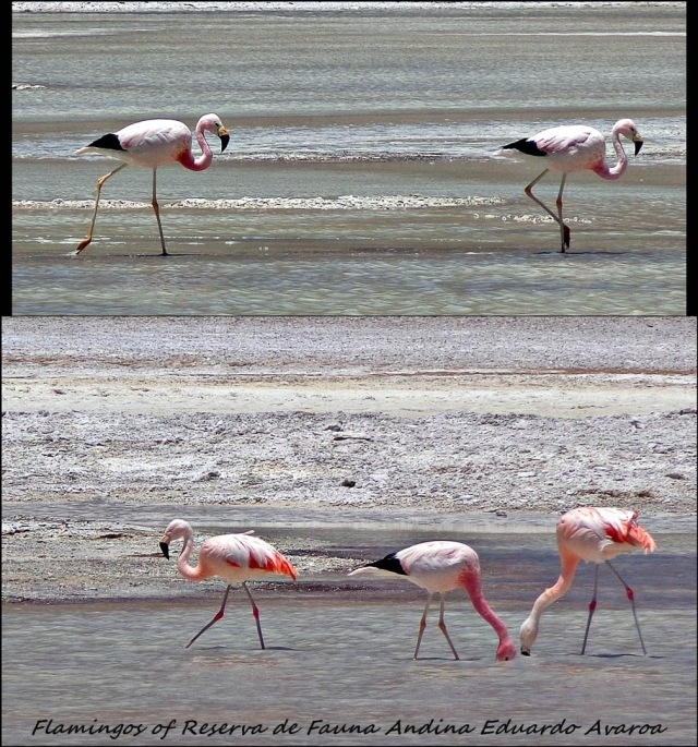 97 - flamingo (Large)