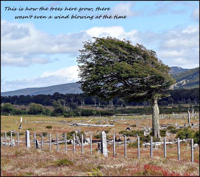 163 - Patagonian Wind (Large)