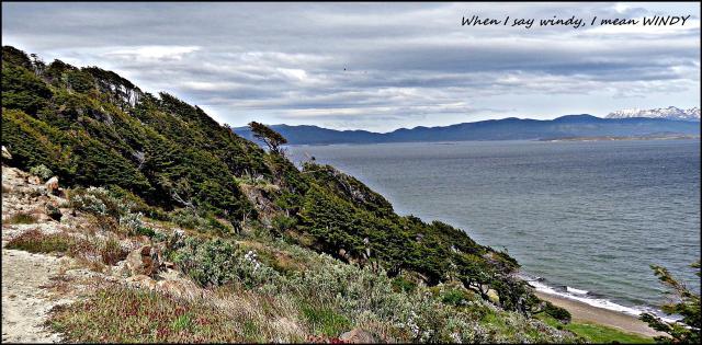 163b - Patagonian wind (Large)