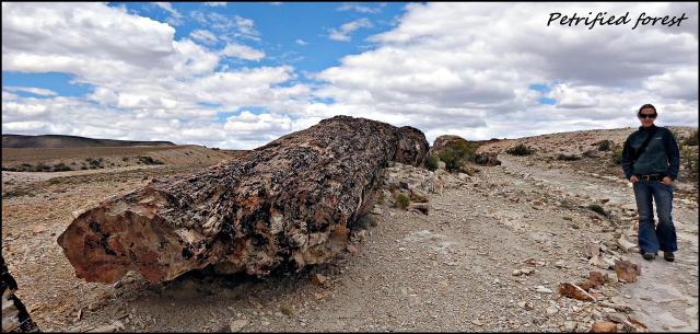 184 - Petrified forest (Large)