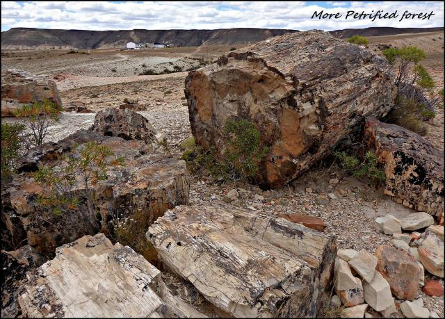 185 - Petrified forest (Large)