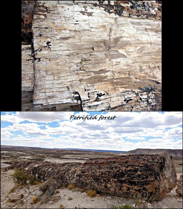 186 - More petrified forest (Large)