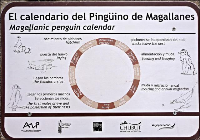 203 - Penguin calender (Large)