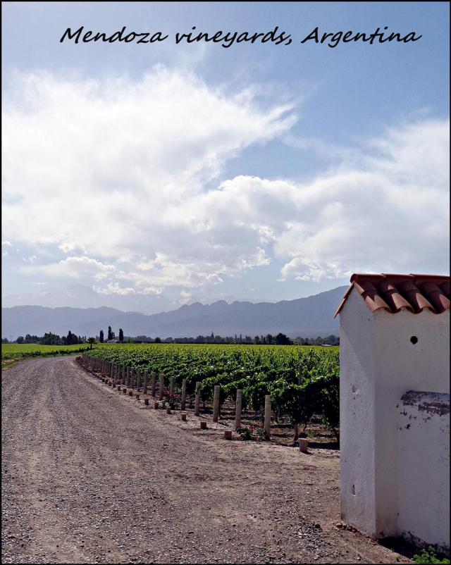 38 - Mendoza winelands (Large)
