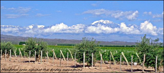 59 - Mendoza area winelads against the Andes (Large)
