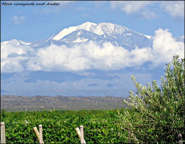 60 - Menoza winelands and Andes (Large)