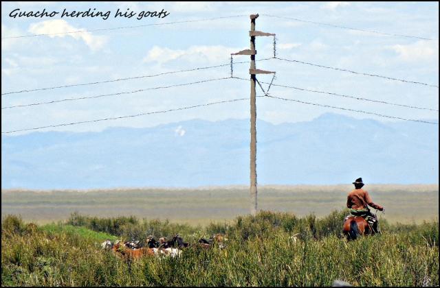 64 - Patagonian guacho's (Large)
